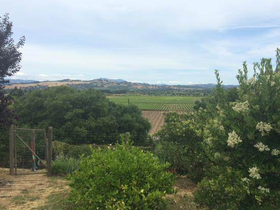 Twomey Cellars: Looking out over the vineyards