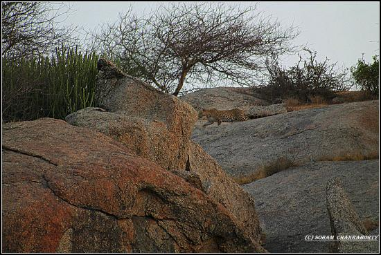 Varawal Leopard Camp
