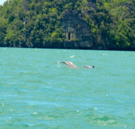 Kilim Karst Geoforest Park: Dolphins