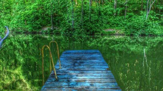 Возле лесного озера