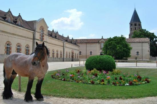 ‪Haras National de Cluny‬