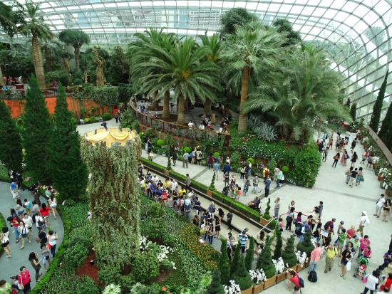 gardens by the bay flower dome special exhibition tulipmania