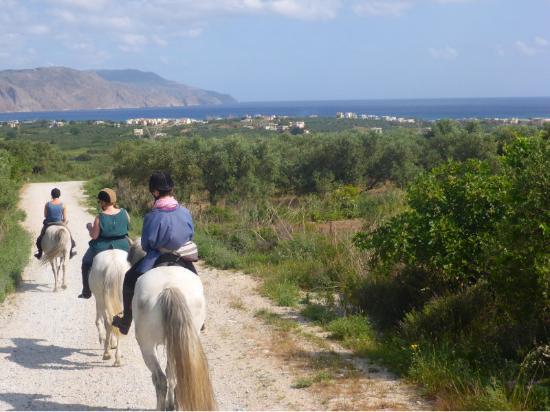 Zoraida's Horseback Riding