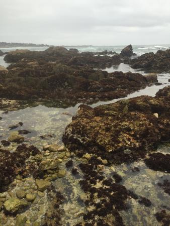 Bed And Breakfast Pacific Grove Awesome tide pools! - Picture of Asilomar State Beach ...