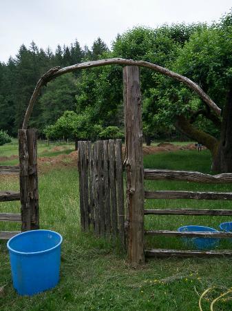 Alsea, OR: Pretty farm gate