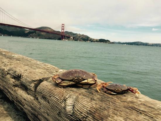 San Francisco Crabbing Crew