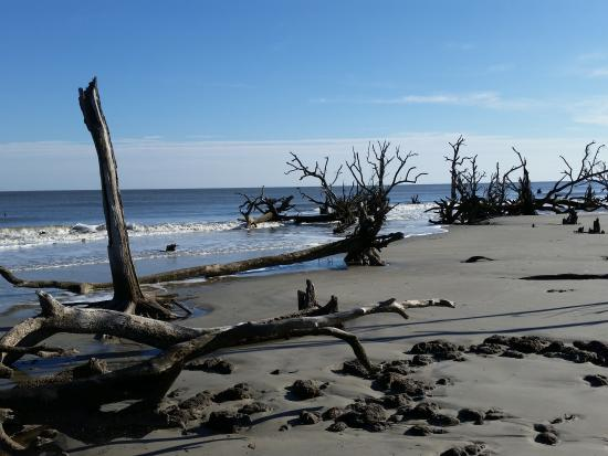 Hunting Island State Park Campground Foto