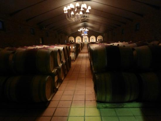 Stellenbosch, South Africa: Wine barrels