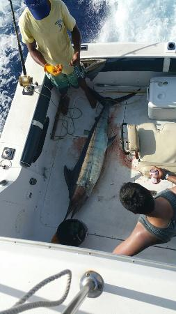 Marlin Madness: Excellent crew 