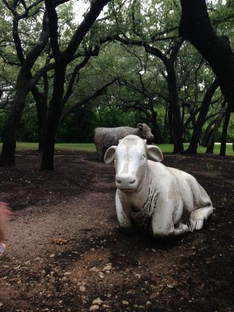The Arboretum: Cow Sculptures and Garden