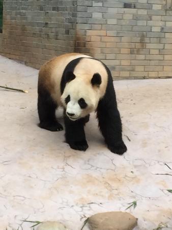 Trip to the panda