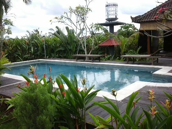 Villa Surya Abadi: Villas very own swimming pool