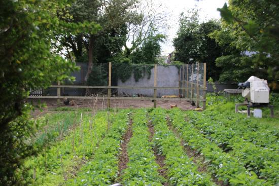 Woodview Farmhouse: Veg Garden
