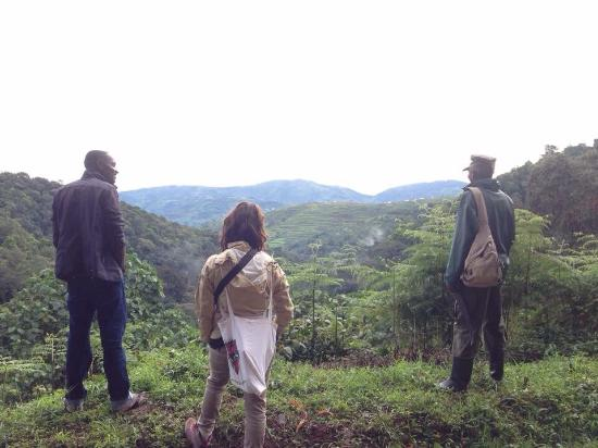 Gorillas and Wildlife Safaris - Day Tours: In bwindi impenetrable national park