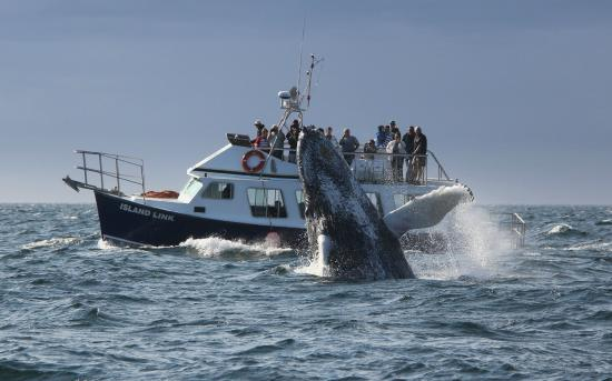 Welcome Aboard Whale Watching Tours