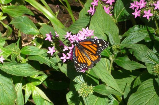 Un beau papillon se nourrit sur une past que picture of for Caracteristicas de un jardin botanico