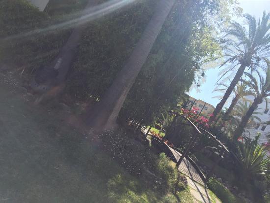 Apartamentos jardines de las golondrinas picture of for Jardines las golondrinas marbella
