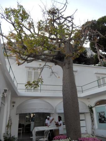 Hotel Diva La Canzone del Mare: l'albero del cotone all'ingresso