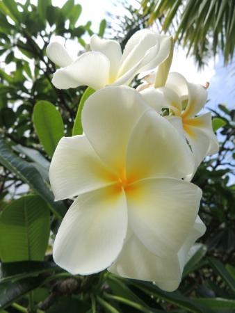 Paleaku Gardens Peace Sanctuary: Flower