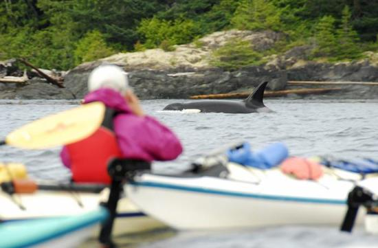 Heriot Bay, Canada: Kayak the realm of the Orcas!
