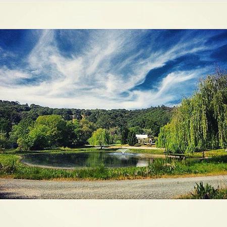 Grass Valley, كاليفورنيا: The Pond!