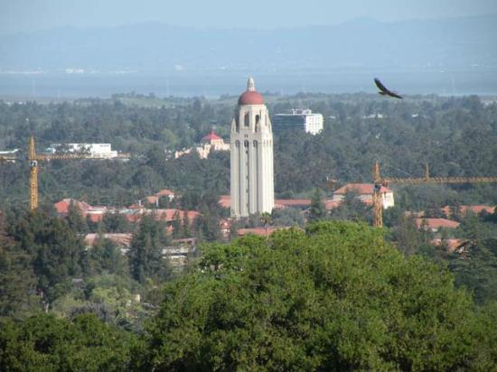 Palo Alto, Kalifornia: Stanford's Hoover Tower, and a flying hawk, can be seen from the top of the hill.
