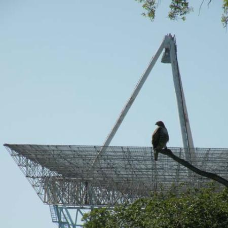 Palo Alto, Kalifornia: Cooper's Hawk silhouetted by the Dish