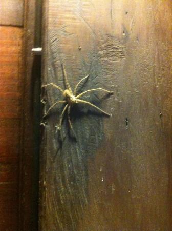 Tainos Cottages: Notre amie l'araignée!