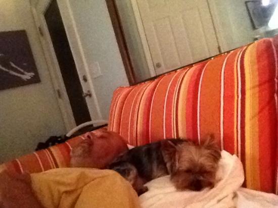 Pineapple Beach Villas : My pet enjoying her stay