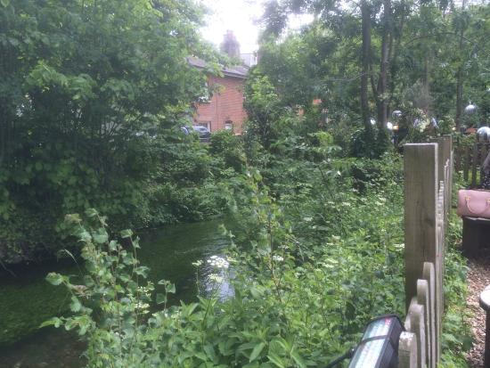 The Willow Tree: Garden Riverview
