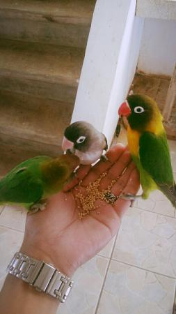 The Ranch Resort : These birds are so lovely