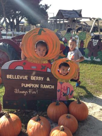 Bellevue Berry and Pumpkin Ranch