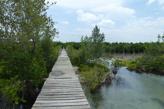 Никеро, Куба: plataforma que lleva al lugar exacto del Desembarco y recorre el trayecto que realizaron los rev