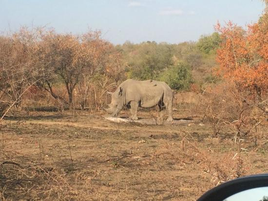 ‪‪Kruger Sky Shuttle Service‬: Solitary Rhino in Kruger National Park‬