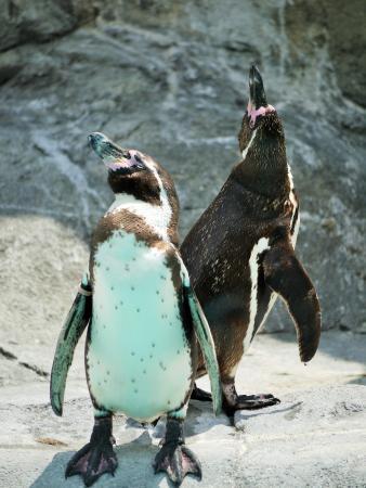 Ehime Tobe Zoo: ペンギン