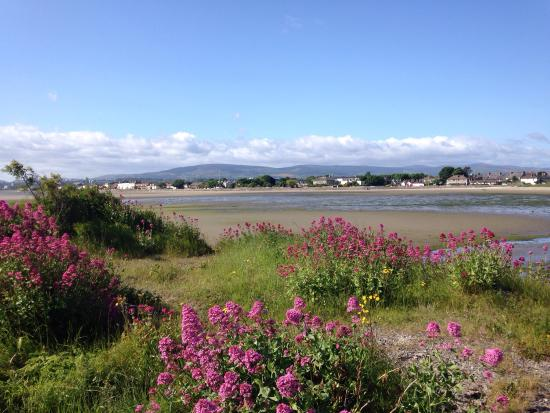 Irishtown Nature Reserve