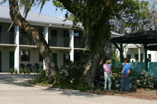 Steinhatchee River Inn: We love our big oak tree