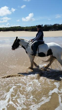 Tina's Riding Stables: Gypsy in the sea