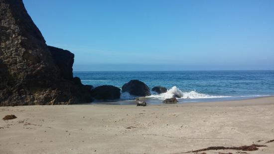 Westward Beach: Sea lion on the beach