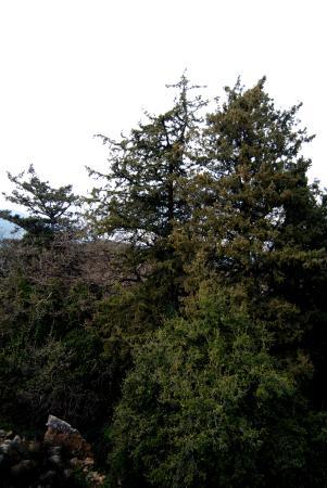 Mountain vista resort bewertungen fotos preisvergleich for Mt vista cabina e motel