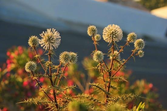 Nataly & Katrin: early morning flowers