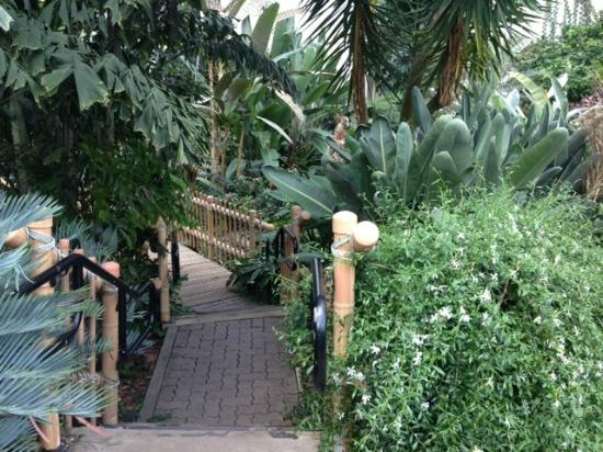 Foellinger Freimann Botanical Conservatory: Tropical Forest Exhibit