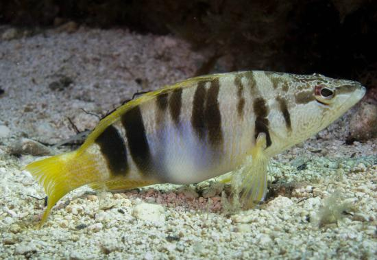 Moby Dives: Colourful fish