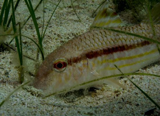 Moby Dives: Wrasse