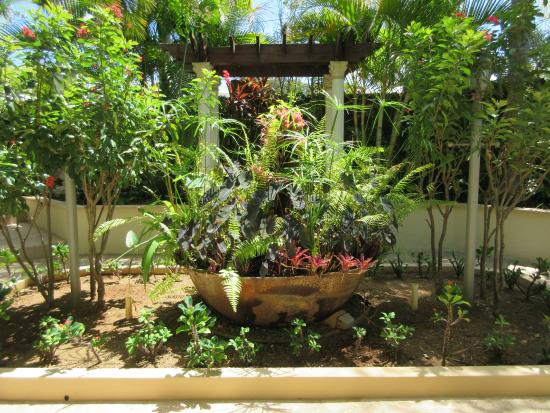 Blue Boy Inn: Lush tropical plants in our secret garden paradise.