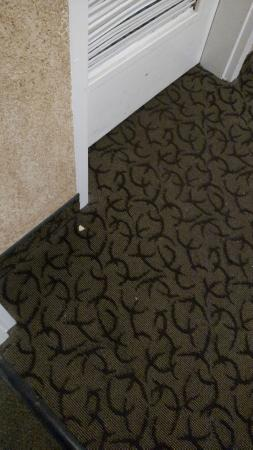 Ramada Rapid City: Food pieces scattered in the hallway