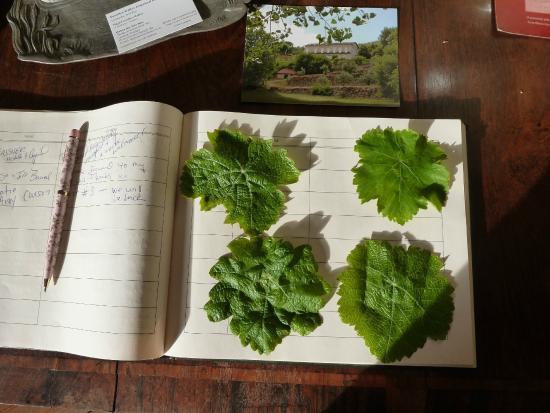 Quinta dos Tres Rios: Wine leaf lesson from Hugh