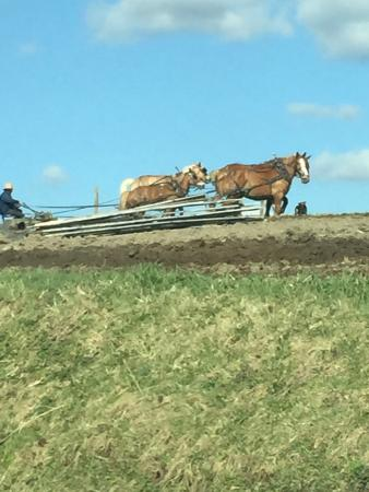 Randolph, NY: Amish team working the field in spring
