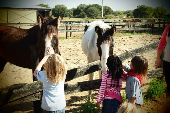 Dream Catchers Equine Rescue barn tours Picture of DreamCatcher Horse Ranch and Rescue 36