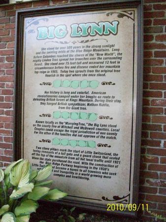 Big Lynn Lodge: History of the Big Lynn Tree